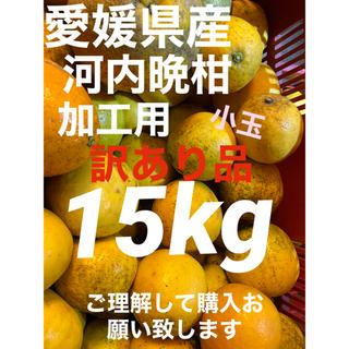 愛媛県産 河内晩柑訳あり15kg 小玉(フルーツ)