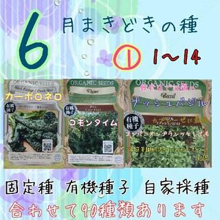 6月まきどきの種 ① 1~14 家庭菜園 野菜の種 ハーブの種 固定種 種 種子(野菜)