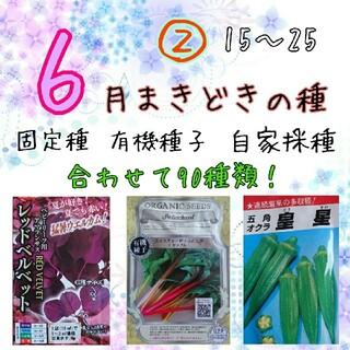 6月まきどきの種② 15~25 家庭菜園 野菜の種 ハーブの種 固定種 種 種子(野菜)