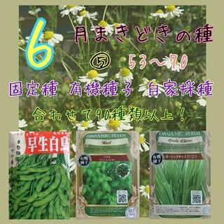 6月まきどきの種⑤ 53~70 家庭菜園 野菜の種 ハーブの種 固定種 種 種子(野菜)