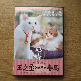 いやし猫DVD 猫侍 玉之丞ときどき春馬 DVD(趣味/実用)
