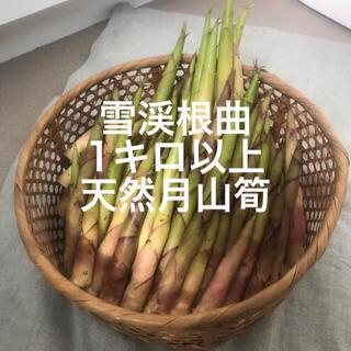 山形県産 山菜 天然月山筍 雪渓根曲がり竹 姫竹 1キロ以上(野菜)