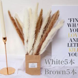 パンパスグラス ホワイト5本 ブラウン5本(ドライフラワー)