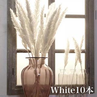 パンパスグラス ホワイト10本(ドライフラワー)