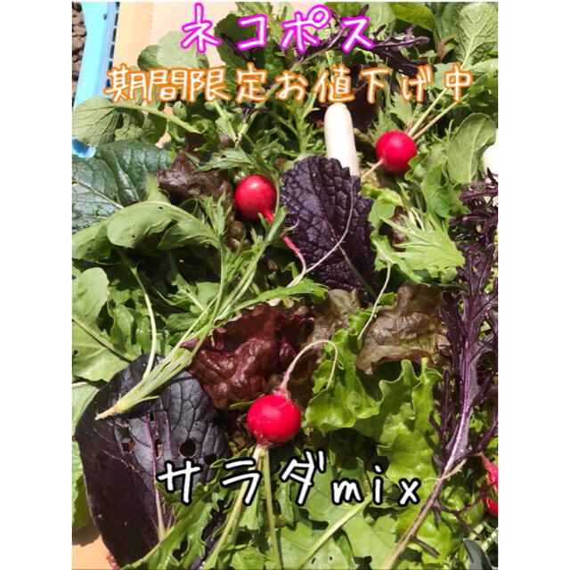 野菜 サラダmix ネコポス 食品/飲料/酒の食品(野菜)の商品写真
