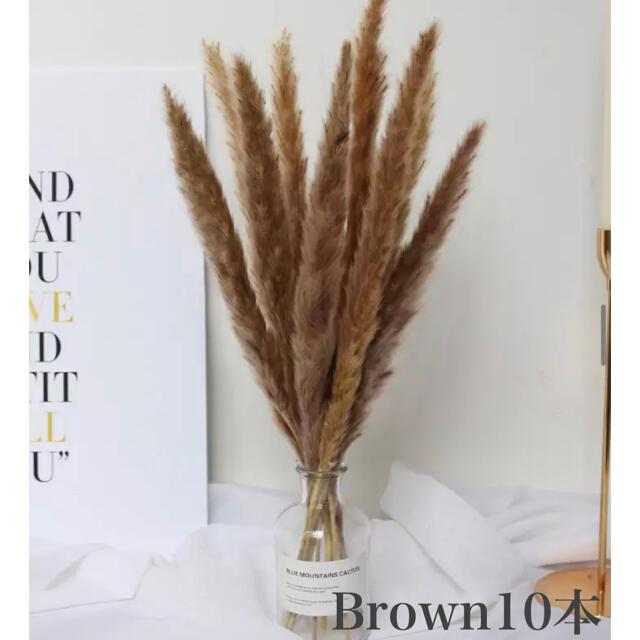 パンパスグラス ブラウン 10本 ハンドメイドのフラワー/ガーデン(ドライフラワー)の商品写真