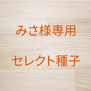 みさ様専用 セレクト種子 10袋(野菜)