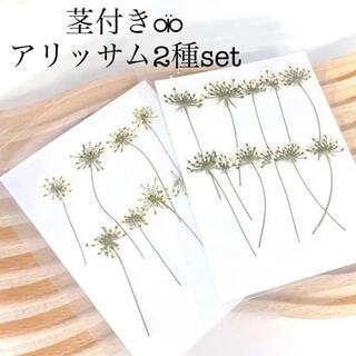 【茎付き♥アリッサム】ハンドメイド用《押し花》ドライフラワー レジンクラフトに(ドライフラワー)