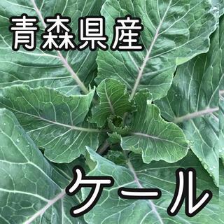 青森県産 農薬不使用  ジューシーケール 250g(野菜)