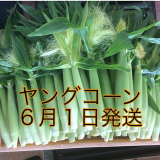 ヤングコーン (野菜)