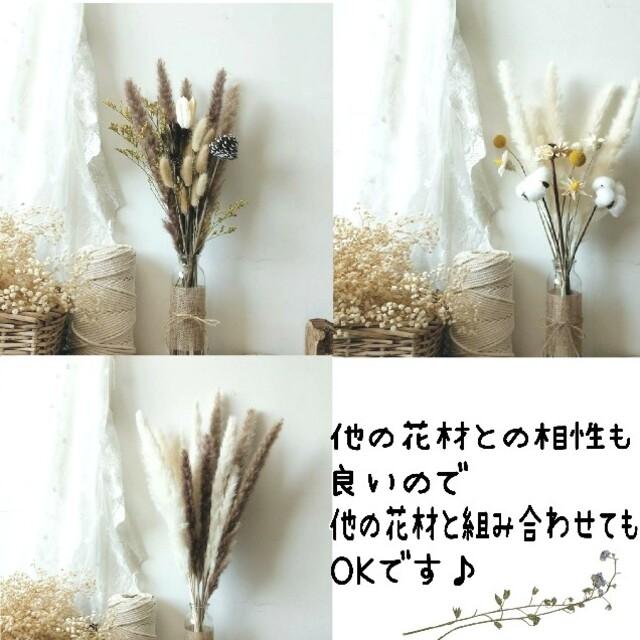 パンパスグラス ドライフラワー おしゃれインテリア 15本 花材 白 ホワイト ハンドメイドのフラワー/ガーデン(ドライフラワー)の商品写真