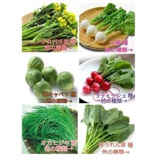 野菜種☆芽キャベツ アスパラ菜 小蕪 ラディッシュ オカヒジキ ほうれん草☆多種(野菜)