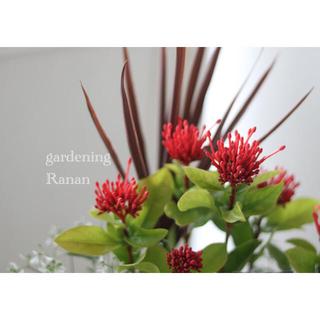 鮮やかサンタンカ❁✿✾毎年楽しむ✿*:お花の贈り物ꕤ*.゚(プランター)