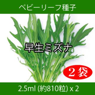 ベビーリーフ種子 B-18 早生ミズナ 2.5ml 約810粒 x 2袋(野菜)