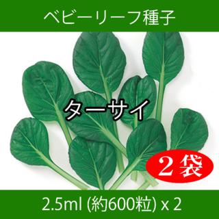 ベビーリーフ種子 B-26 ターサイ 2.5ml 約600粒 x 2袋(野菜)