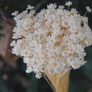 ドライフラワー 小さなお花 フラワー インテリア ナチュラル 北欧 プレゼント(ドライフラワー)