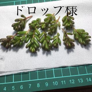 多肉植物 レッドベリー 、乙女心 カット(その他)