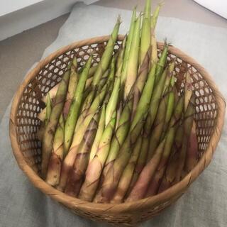 山形県産 山菜 天然月山筍 雪渓根曲がり竹 姫竹 タケノコ 1キロ以上(野菜)