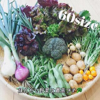 ポパイ畑☆野菜詰め合わせ6/2(水)発送ʕ•ᴥ•ʔ*60size♪サリー様専用(野菜)