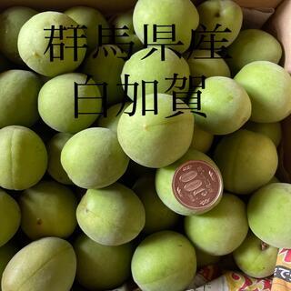 群馬県産 白加賀 4キロ 2日間だけの出品です(野菜)