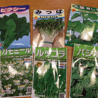 ハーブの種 6種類 ベランダ菜園(野菜)