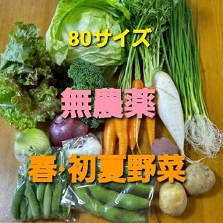 無農薬野菜セット 80サイズ 6月5.6日収穫発送 限定1箱(野菜)