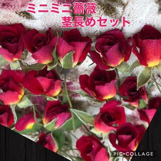 ミニミニ薔薇(茎長め)ドライフラワー★15輪セット+おまけ1輪付き★ミニバラ花材(ドライフラワー)