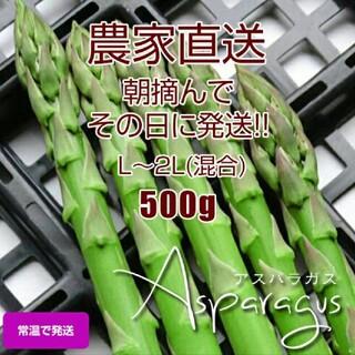 太アスパラ 500g(野菜)