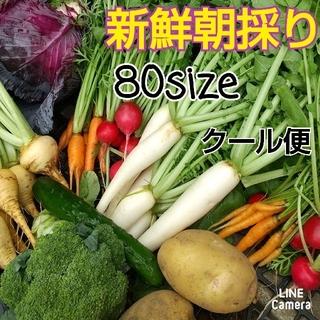 新鮮朝採り【畑〜お野菜直送便♪80size】クール便でお届けします♡農薬不使用(野菜)