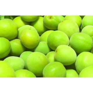 送料無料【 #青梅 5キロ 大玉】 #梅干し #梅酒 用】 #大梅 #梅 5kg(フルーツ)