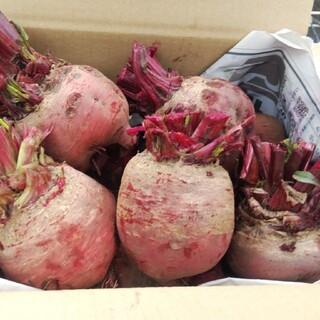 ビーツ2.5kg・珍しいイエロービーツ入(農薬化学肥料不使用)(野菜)