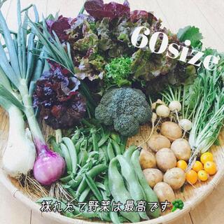 ポパイ畑☆野菜詰め合わせ6/2(水)発送ʕ•ᴥ•ʔ*60size♪(野菜)