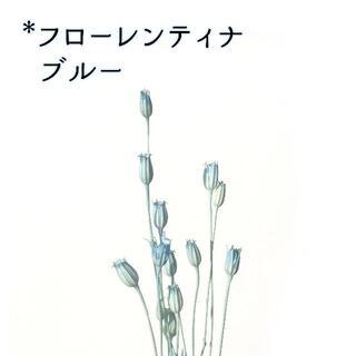 フローレンティナ ブルー 5本(ドライフラワー)