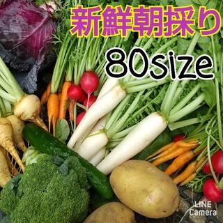 新鮮朝採り【畑〜直送便♪80sizeでお届けです】農薬不使用(野菜)