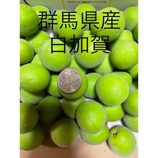 群馬県産 白加賀 4キロ     完全無農薬 手もぎり(野菜)