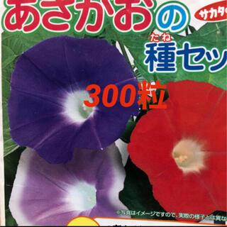 朝顔 種 300粒(その他)