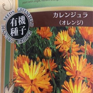 カレンジュラ 種子 10粒(その他)