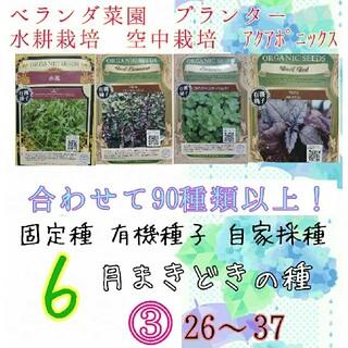 6月まきどきの種③ 26~37 家庭菜園 野菜の種 ハーブの種 固定種 種 種子(野菜)