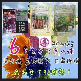 6月まきどきの種④ 38~52 家庭菜園 野菜の種 ハーブの種 固定種 種 種子(野菜)