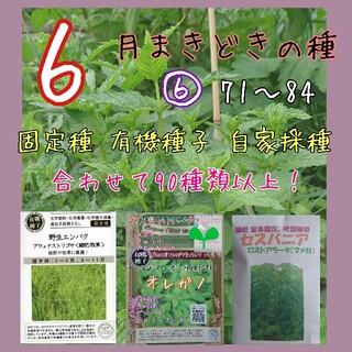 6月まきどきの種⑥ 71~84 家庭菜園 野菜の種 ハーブの種 固定種 種 種子(野菜)