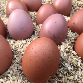 ボリスブラウンの卵(その他)