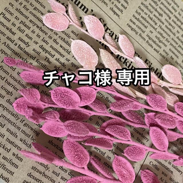チャコ様 専用 【フィビキア ピンク ストロベリー⠀】 ハンドメイドのフラワー/ガーデン(ドライフラワー)の商品写真