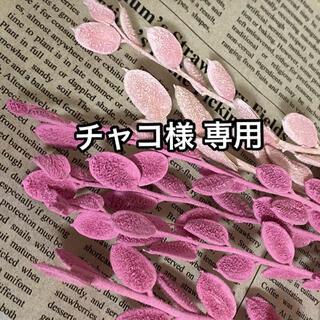 チャコ様 専用 【フィビキア ピンク ストロベリー⠀】(ドライフラワー)