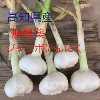 【無農薬】 無農薬 にんにく 国産 高知県産 ジャンボにんにく  1キロ(野菜)