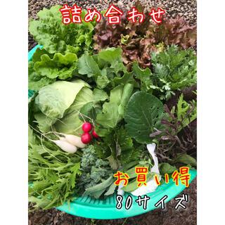 野菜 詰め合わせ 80サイズ お楽しみボックス(野菜)