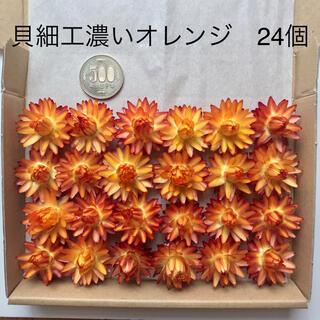 (3)貝細工 ヘリクリサム 濃いオレンジ ドライフラワー 24個(ドライフラワー)