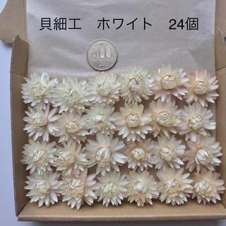 (4)貝細工 ヘリクリサム ホワイト ドライフラワー 24個(ドライフラワー)