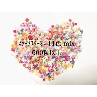 ★大人気★スターフラワーミニ11色mix600粒以上 箱入り(ドライフラワー)