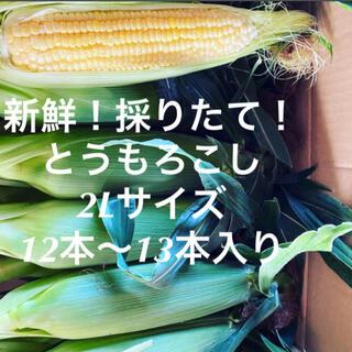 千葉県産 トウモロコシ 13本(野菜)