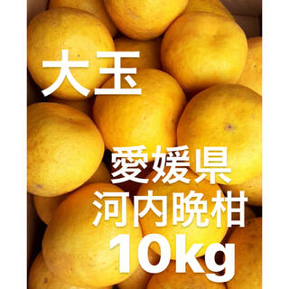 koeda様 専用 愛媛県 宇和ゴールド 河内晩柑 10kg(フルーツ)